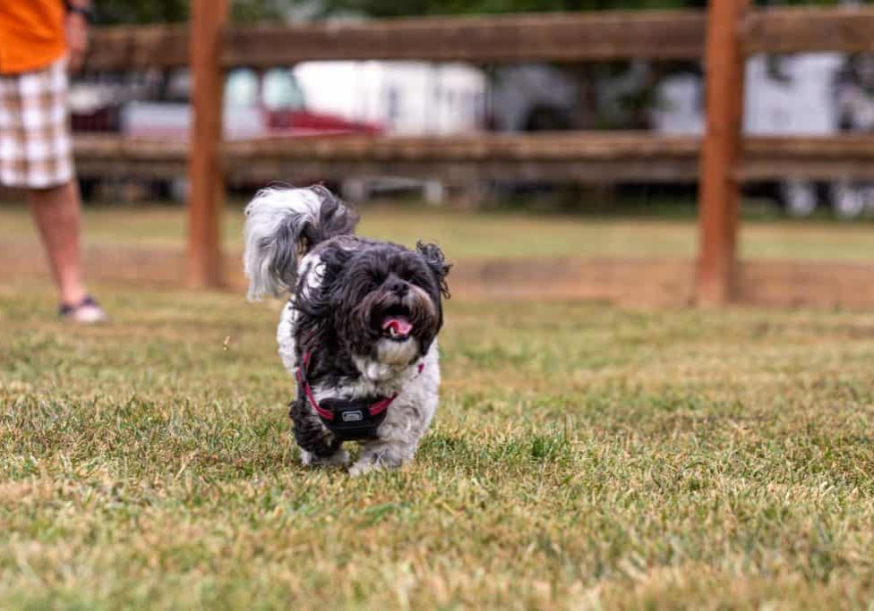 dog playing in dog park